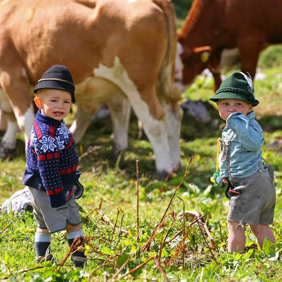 kids and cows at the almenweg