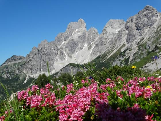 alpine hiking in filzmoos | © TVB Filzmoos/Alfred Hahn